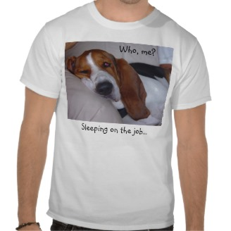 where to buy clothes for my basset hound-101.jpg