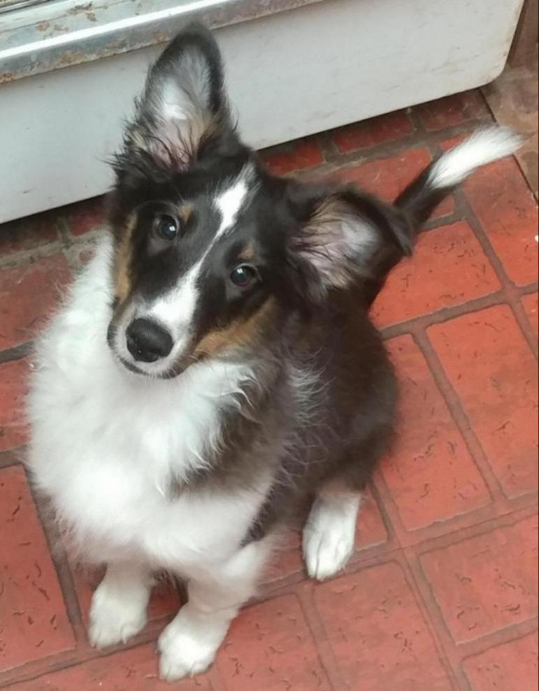 New dog woes-1117172107-1_1513234884499.jpg