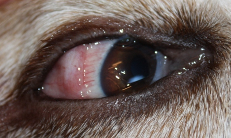 Eye problem--conjunctiva biopsy?-2-smaller.jpg