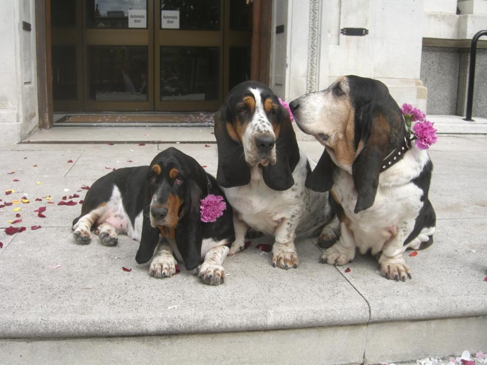 Show me your Basset!!!-2009.07.27-186-.jpg