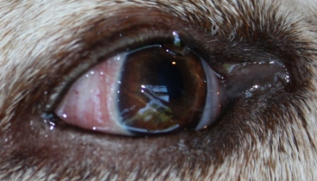 Eye problem--conjunctiva biopsy?-5-smaller.jpg