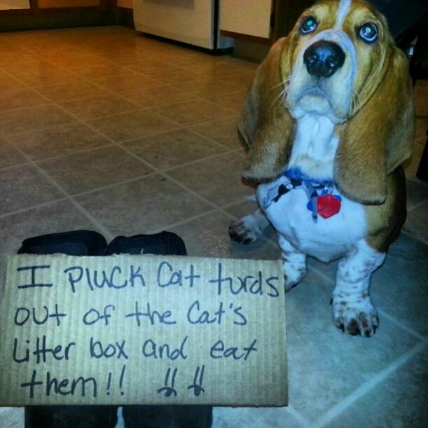 Show me your Basset!!!-dog-shame.jpg