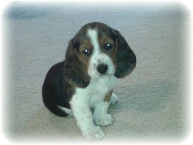 Our new hush puppy, Emma!-image.jpg