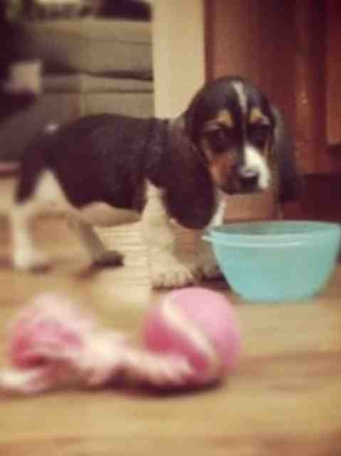 My new puppy-imageuploadedbypg-free1357335026.810762.jpg