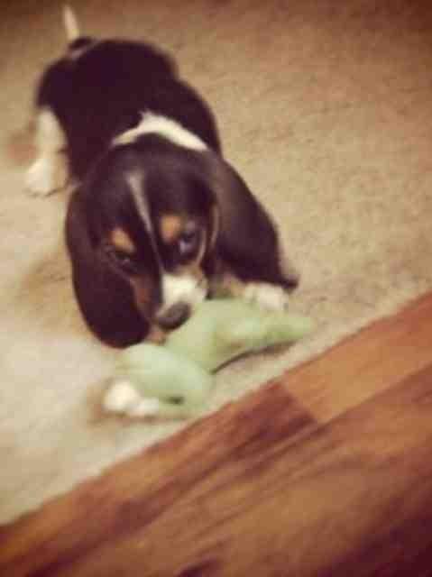 My new puppy-imageuploadedbypg-free1357335037.216065.jpg