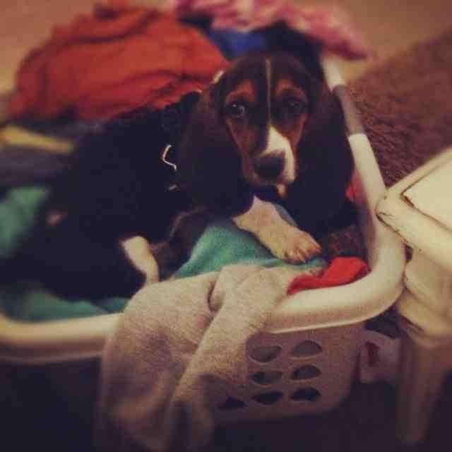 My new puppy-imageuploadedbypg-free1357335054.471995.jpg