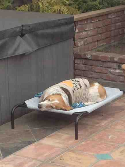 Show off your sleepy bassets!-imageuploadedbypg-free1358964704.047595.jpg