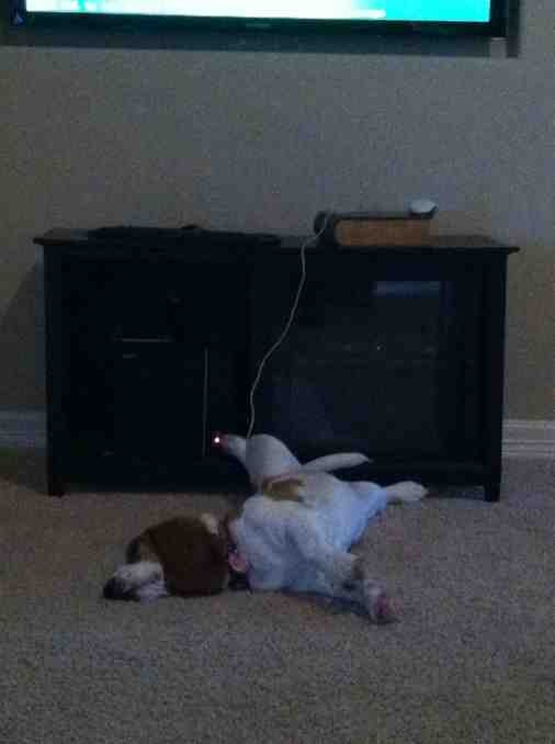 Show off your sleepy bassets!-imageuploadedbypg-free1358993848.944200.jpg