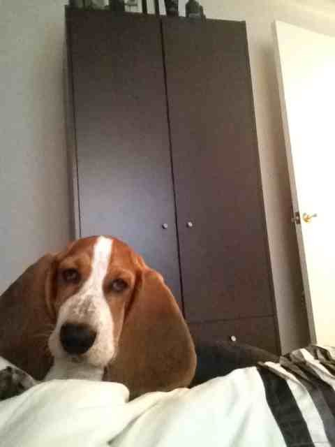 But I don't wanna get out of bed mummy!!!!-imageuploadedbypg-free1359535138.183051.jpg
