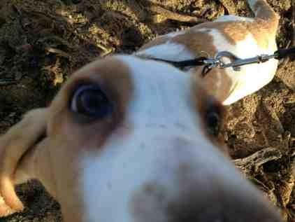 Puppy Envy-imageuploadedbypg-free1359754648.095821.jpg