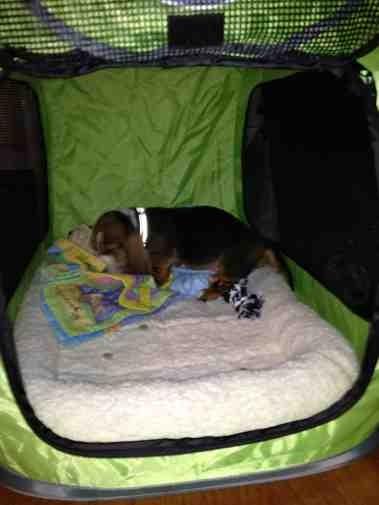 New puppy-imageuploadedbypg-free1359841583.456637.jpg
