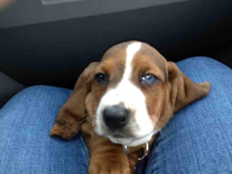 New puppy-imageuploadedbypg-free1359841594.589351.jpg