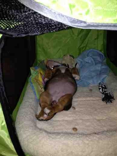 New puppy-imageuploadedbypg-free1359845572.427873.jpg