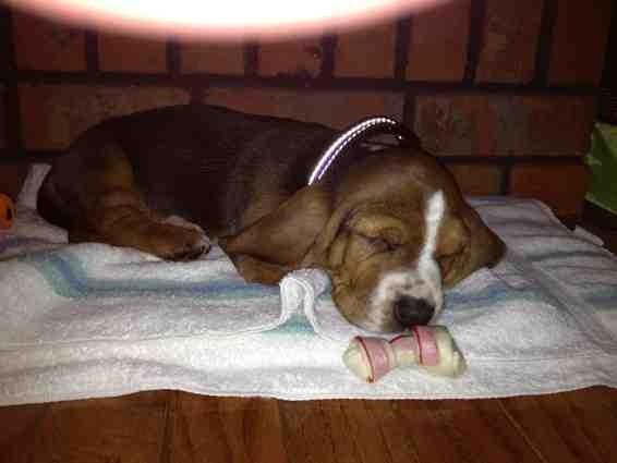 New puppy-imageuploadedbypg-free1359918290.989861.jpg