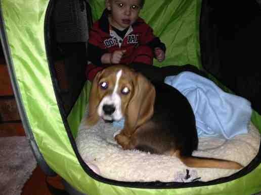 New puppy-imageuploadedbypg-free1360766951.443942.jpg