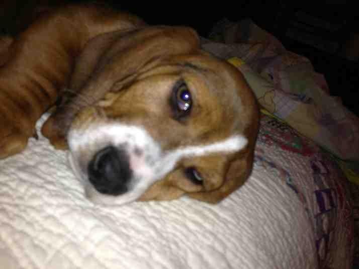 New puppy-imageuploadedbypg-free1361217131.778798.jpg