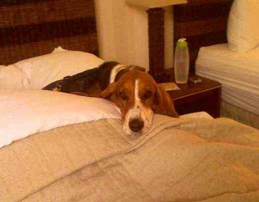 Show off your sleepy bassets!-imageuploadedbypg-free1374423869.036086.jpg
