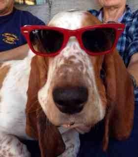 Doggie Door/Housebreaking-imageuploadedbypg-free1389834048.043453.jpg