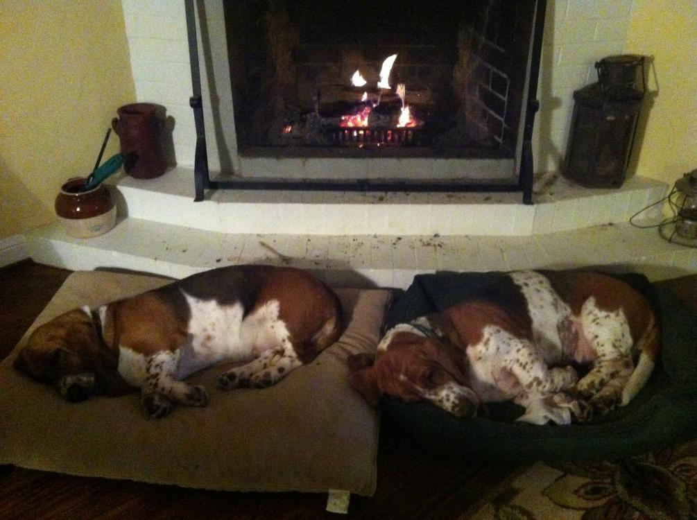 Show off your sleepy bassets!-img_0282.jpg