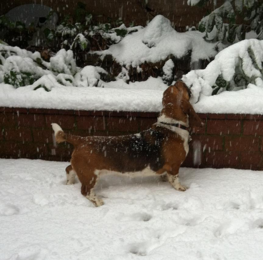 First Snow-img_0305.jpg