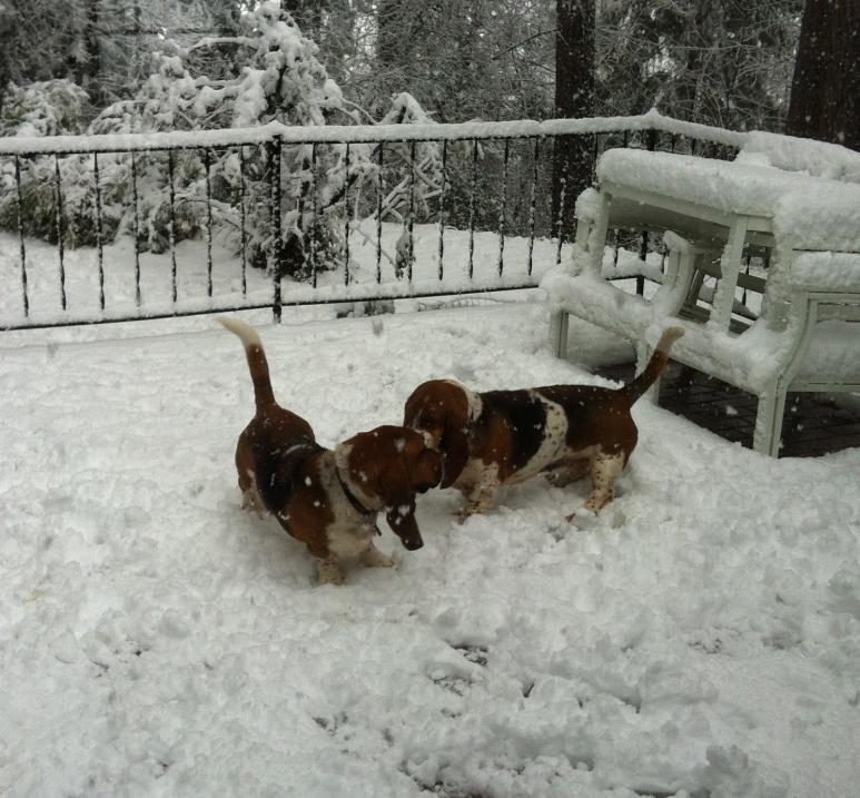 First Snow-img_0313.jpg