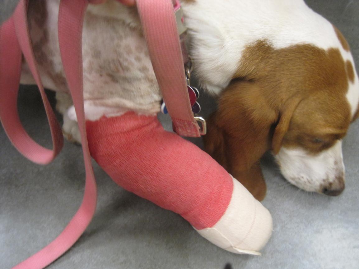 sophie surgery update-img_0643.jpg