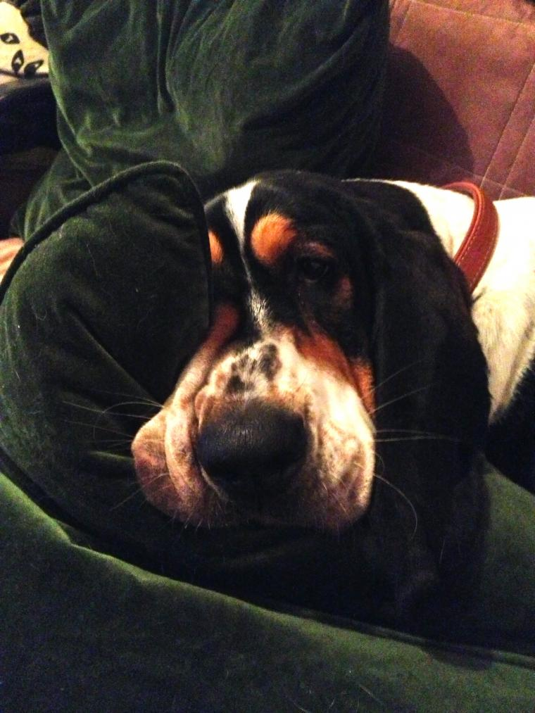 Show off your famous moping basset!!-img_1419.jpg