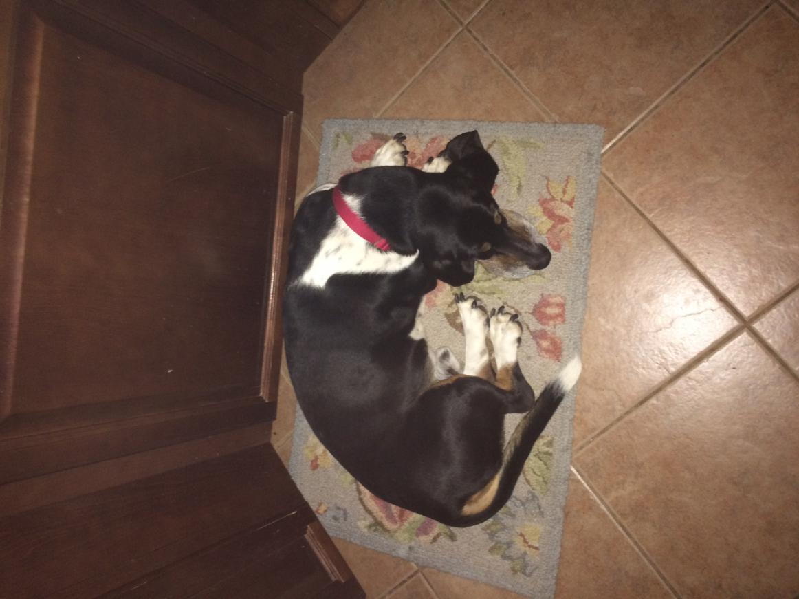 New Basset Adoptee!!-img_3294.jpg