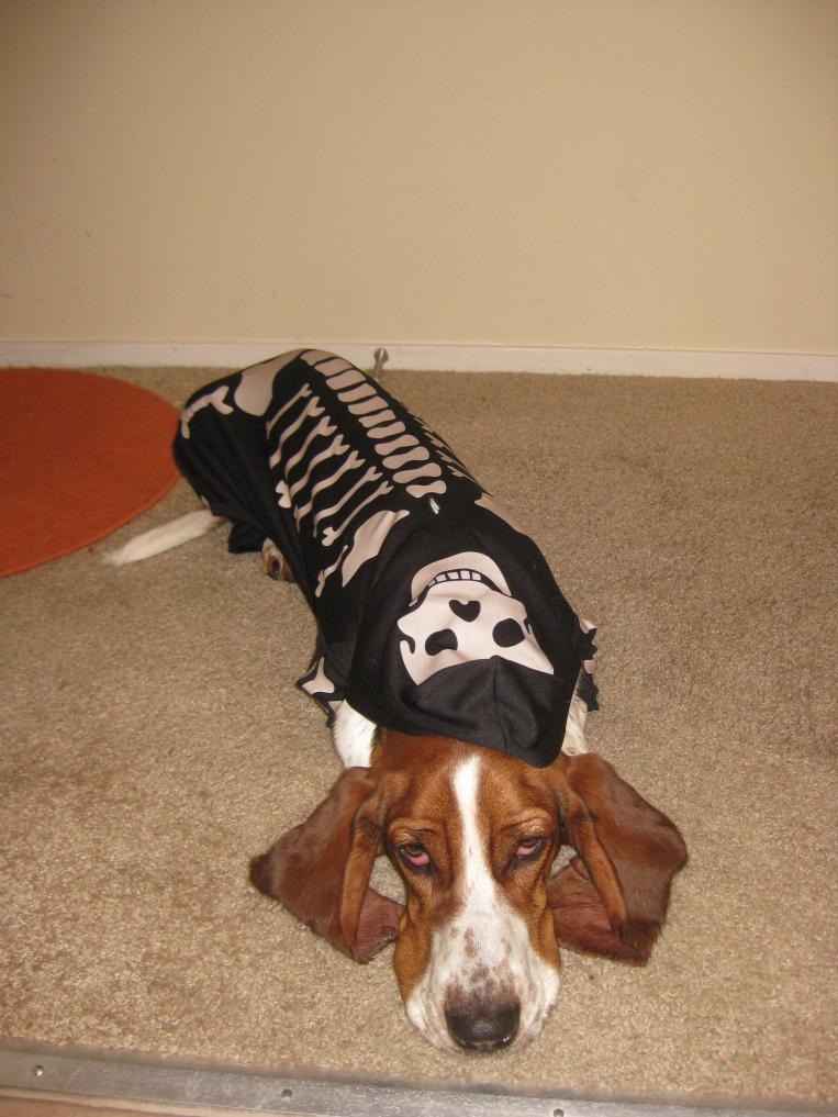 Halloween Costume Contest Basset Hounds Basset Hound Dog Forums