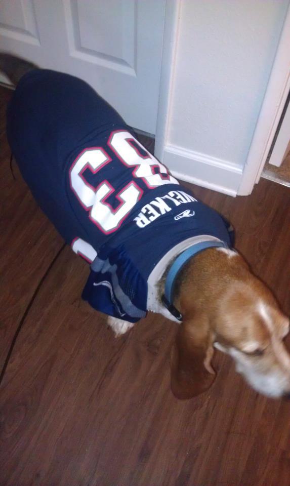 Game Day - Basset Hound Style!!-jersey-1.jpg