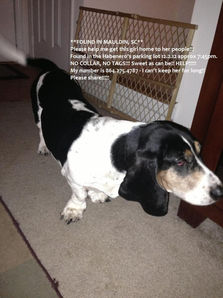 Taking a chance... (found basset hound)-lost.jpg