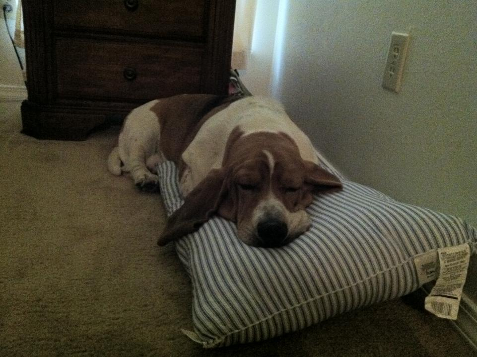 Show off your sleepy bassets!-sleeping.jpg