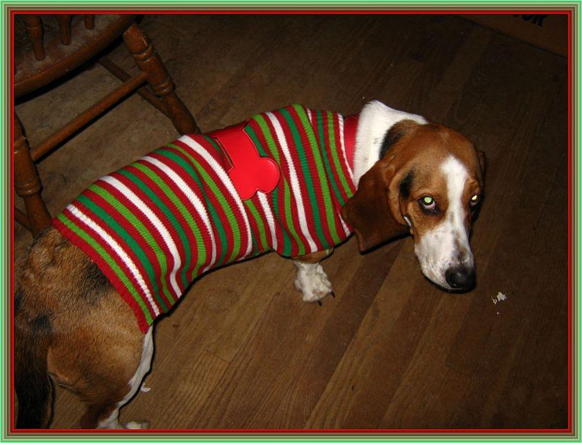 Thread For Posting Holiday Greetings Page 4 Basset Hounds
