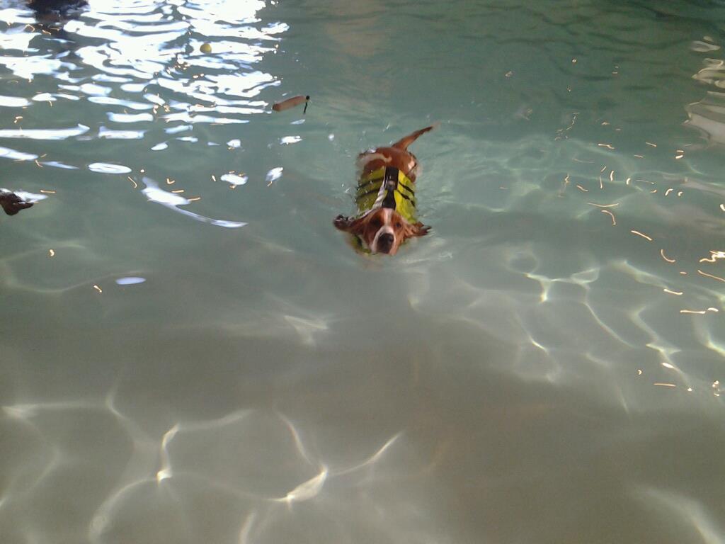 Swimming-swimming.jpg