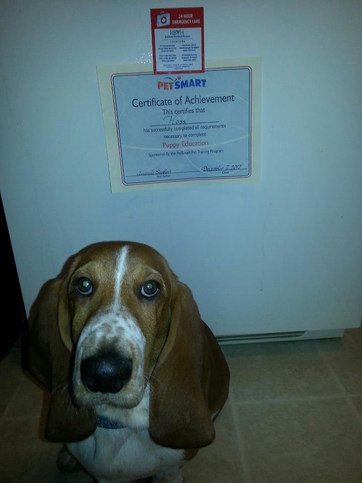 Hoss Passed Puppy Education-training.jpg