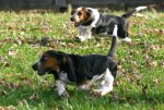 Puppies_and_fall_leaves_014.JPG