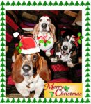 Basset_Holiday_Picture_Smaller.jpg