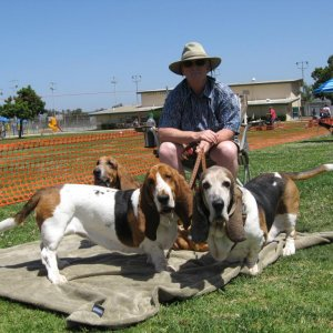 At the San Diego basset Rescue picnic