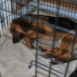 He decided to lay down in my Brother-in-Law's dog's cage. I think he looks like he's in doggie jail. :P